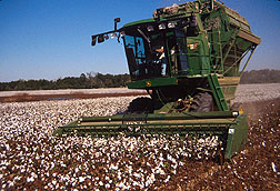 Cotton stripper harvesting UNR cotton. Click here for full photo caption.
