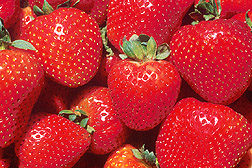Photo: Strawberries. Link to photo information