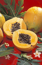 Gold, a new papaya variety developed by a plant physiologist: Click here for full photo caption.