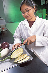 Technician slicing eggplant.