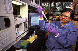 Chemist Marjorie Medina prepares egg samples for analysis: Link to photo information