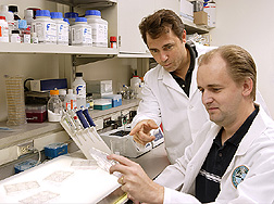 Chemist and biologist examine results of breast cancer cells combined with different concentrations of glyceollins: Click here for full photo caption.