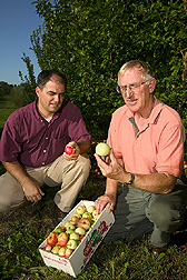 Plant geneticist and horticulturist observe fruit diversity from seedling trees of M. sieversii: Click here for full photo caption.