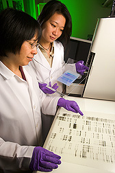 Li Li and Li-Wei Chiu examine prinout of genetic data. Link to photo information