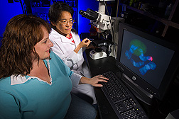 Entomologist (left) and technician discuss the location of a fluorescent-labeled marker through a confocal microscope: Click here for full photo caption.