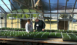 Technician (left) and geneticist evaluate new bluegrass hybrid seedlings at Woodward: Click here for full photo caption.