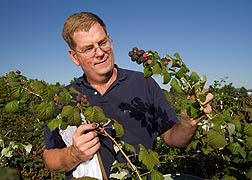 Plant geneticist evaluates black raspberry plants: Click here for full photo caption.