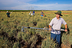 Agricultural engineers (right) and (far left) collect remote-sensing data while technician (right center) and physical scientist (left center) monitor soil-water depletion and crop evapotranspiration: Click here for full photo caption.