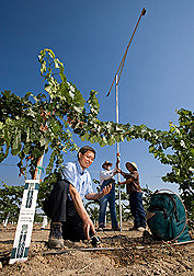 Soil scientist (left) records soil moisture data with a probe as technician (right) and agricultural engineer record grape canopy cover with a spectral camera: Click here for full photo caption.