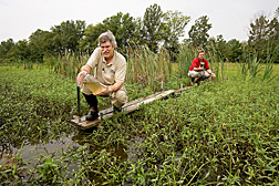 In a constructed wetland at Beasley Lake, agricultural engineer (left) collects water samples as ecologist uses a multimeter to record water quality to determine how well the wetland filters pollutants: Click here for full photo caption.