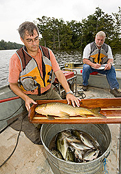 Ecologist inspects and weighs a common carp while biologist records data: Click here for full photo caption.