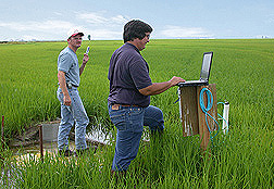 In studies of water use, runoff, and water quality, ARS agricultural engineer (right) and University of Arkansas technician collect data from a MIRI system: Click here for full photo caption.