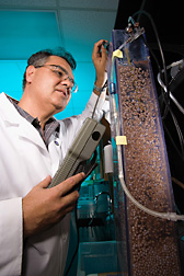 ARS scientist with bioreactor used for removing nitrates from swine effluent. Link to photo information