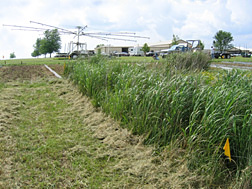 Native grass buffers (including switchgrass and gammagrass) were found to be most effective in reducing atrazine, a widely used herbicide, in runoff: Click here for photo caption.
