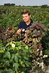 In College Station, Texas, geneticist and curator of the National Cotton Germplasm Collection, inspects the variation in leaf shape and coloration among cotton lines: Click here for full photo caption.