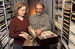 Collections manager and mycologist examine a fusiform rust of pine, one of more than 1 million specimens in the U.S. National Fungus Collections: Click here for full photo caption.
