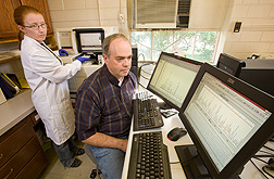 Entomologist and technician examine DNA sequences of boll weevil microsatellite markers to be used in population assignment analysis: Click here for full photo caption.