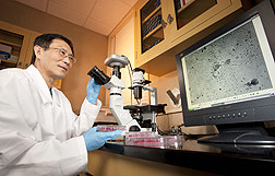 Microbiologist examining recombinant Newcastle disease virus vaccine candidates in infected cells.