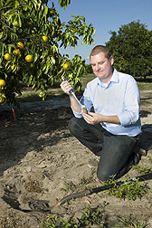 University of Florida assistant professor applies a nematode attractant to a nematode lure to be tested below ground in a citrus field: Click here for full photo caption.