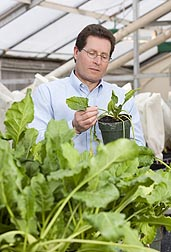 Photo: ARS plant pathologist Carl Strausbaugh studies a sugar beet for signs of resistance to various diseases. Link to photo information