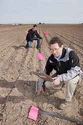 Plant pathologist Carl Strausbaugh (foreground) and technician Joshua Reed mark field plots in a disease-screening nursery in Kimberly, Idaho: Click here for photo caption.