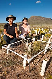 ARS molecular biologist Mary Lucero (left) and New Mexico State University graduate student Lori Kae Schwab evaluate establishment and reproductive success of black grama grass, Bouteloua eriopoda, transplants: Click here for full photo caption.