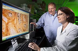 Technician Ami Frank studies images of Leptospira in silver-stained experimental tissues while veterinary medical officer David Alt observes: Click here for photo caption.