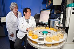 "Horticulturalist Elizabeth Baldwin (left) and chemist Jinhe Bai review data from the ""electronic tongue,"" a device that can detect chemical differences related to taste to see whether it can distinguish between juice from HLB-infected oranges and from noninfected oranges: Click here for photo caption."