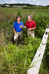 In tests to see how well vegetated drainage ditches like this one reduce agricultural pesticide and nutrient runoff, ecologist Matt Moore (left) and soil scientist Martin Locke assess the biomass of plants growing in the ditch: Click here for photo caption.