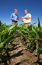 Soil scientists Brian Wienhold (left) and Gary Varvel compare corncob residue in various stages of decomposition in no-till corn in Lincoln, Nebraska: Click here for photo caption.