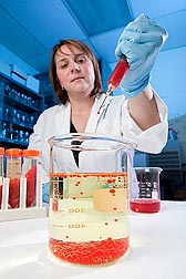 Support scientist Carolyn Parker prepares gelatin beads for vaccination studies: Click here for full photo caption.