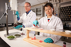 Plant physiologist Gene Lester and research assistant Zhenlei Xiao extract human health nutrients from microgreens: Click here for photo caption.