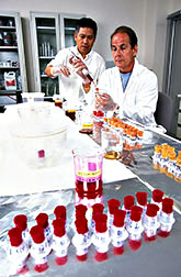 Entomologist Nicanor Liquido and technician John Ross apply precise combinations of insecticidal dye-and-bait mixtures to cotton wicks.