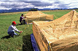 To gauge grasshopper population density, researchers set up 10-meter-square tent enclosures.