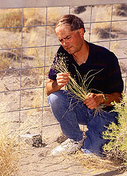 Ecologist William longland inspects Indian ricegrass