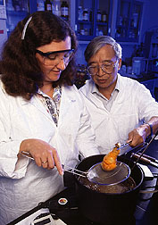 Scientists demonstrate fried chicken coating made from low-fat-uptake rice flour batter. Click here for full photo caption.