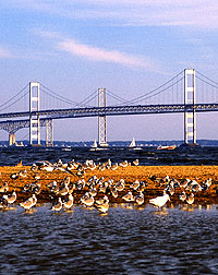 Scenic photo showing bay waterfowl and, in background, Chesapeake Bay Bridge. Link to photo information