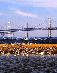 Chesapeake Bay Bridge. Click here for full photo caption.