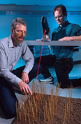 Agricultural engineers examine the scanner's laser light pattern on standing wheat residue in the lab. Link to photo information.