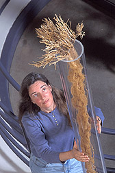 Technician holds alfalfa plant with its 14-foot long roots exposed.  Link to photo information