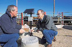 Animal scientist and agricultural engineer examine runoff samples from a pen: Click here for full photo caption.