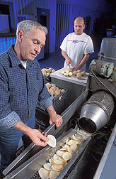 Pilot plant operator and technologist prepare slices of potatoes for frying and evaluation: Click here for full photo caption.