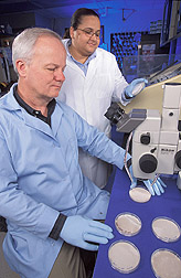 Two microbiologists observe Paecilomyces cultures: Click here for full photo caption.
