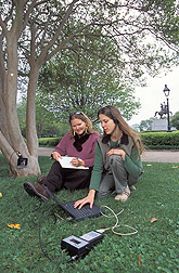 Technician and biological science aide evaluate termite infestation in trees: Click here for full photo caption.