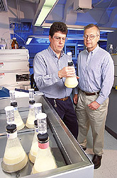 David Johnston and Kevin Hicks check fermentability of enzymatically milled corn. Link to photo information