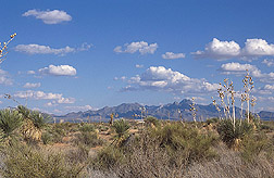 Photo: Grassland-shrub savanna on the Jornada Experimental Range. Link to photo information