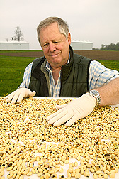 Geneticist Niels Nielson inspects soybean seeds before planting them as experimental controls. Link to photo information