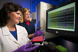 Technician and geneticist work on DNA-sequencing samples to identify molecular markers in cotton: Click here for full photo caption.