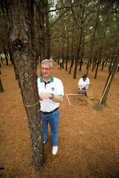 David Burner measures tree diameter whileKaren Chapman and Jim Whiley measure pine straw yields from 1-meter-square grids. Link to photo information