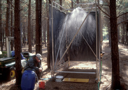 Using a rainfall simulator, technician collects runoff from a loblolly pine stand: Click here for full photo caption.